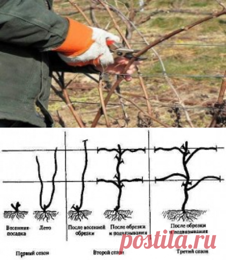 Cutting of a vineyard.