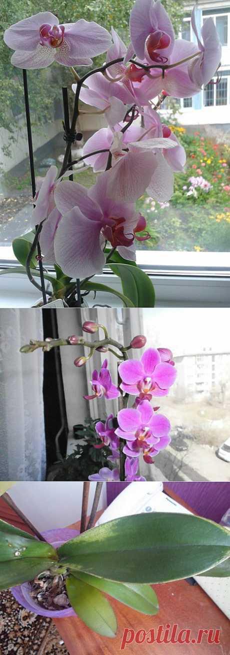 [Секреты цветения] Орхидея | Умный дом | ВКонтакте