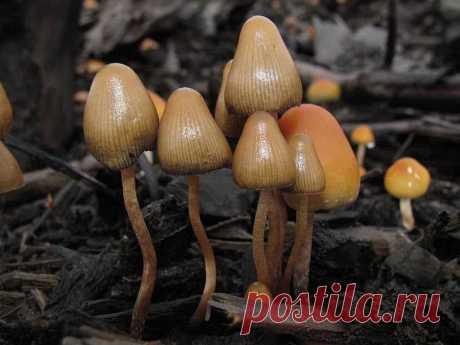 Псилоцибиновые грибы - 10 веществ расширяющих сознание В ранних исследованиях, где псилоцибиновые грибы употреблялись здоровыми взрослыми в благоприятных условиях, многие участники сообщали о...