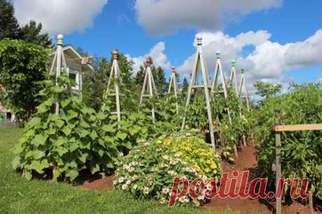 Чем подкормить огурцы в грунте, чтобы увеличить урожай в 2 раза — Садоводка