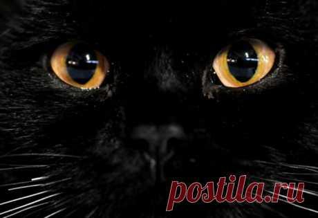 Почему у кошки светятся глаза - Братья наши меньшие - ГОРНИЦА -блоги, форум, новости, общение