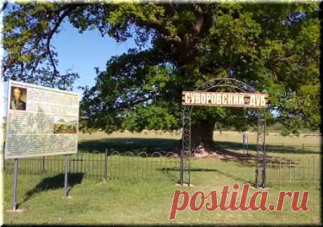 Суворовский дуб в Белогорске, Крым: фото, как проехать, история