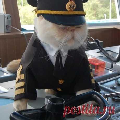 Скромный парень-морячок в клешах индиго, Он ходил в Игарку, в Рио, в Нагасаки, Угощал портовых кошек терпким ромом, Кошки плавились, смотрели и вздыхали...  Это все про него, про петербургскую знаменитость - кота Матроса. Вот уже семь  лет он несет вахту на теплоходе «Николай Чернышевский». Из Петербурга в Москву и обратно - такая его кошачья жизнь.