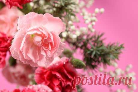 Roses_Pink_color_437188.jpg (1280×853)