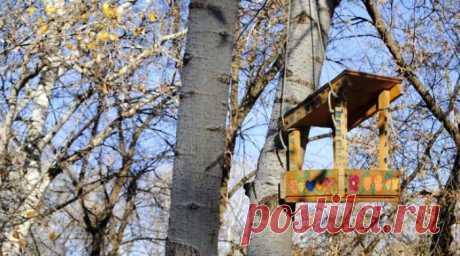 Кормушку для птиц можно сделать из подручных материалов своими руками. Изготавливаем из дерева, стеклянных и пластиковых бутылок, коробок. Чертежи
