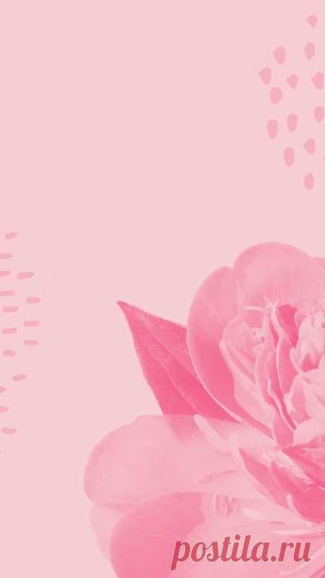 Фон для Инстаграм. Фон для сторис Stories / Фон для сторис. Идеи, как оформить Инстаграм Stories. Нежный фон для сториз с цветами. Фон с розами. Пастельный фон для сторис. Фоны | Background для ваших…