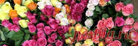 Весенние подкормки для роз - для пышного цветения| Полезные статьи на блоге Беккер