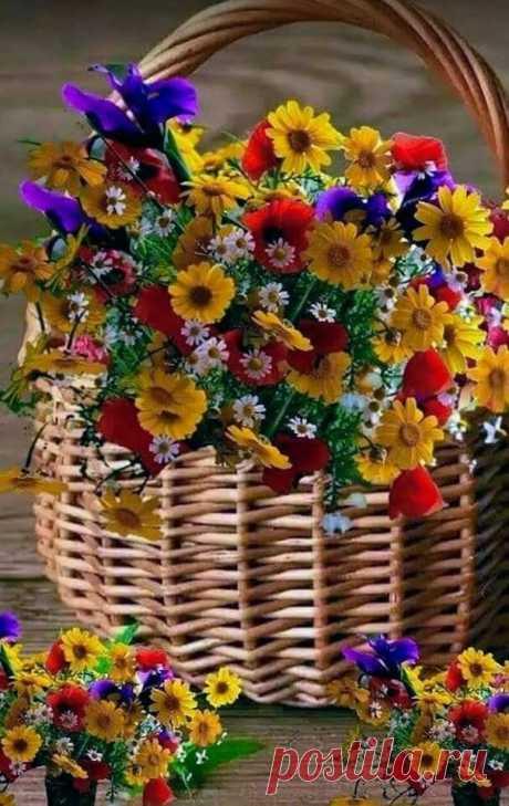 �� Осеннее очарование для вас, Друзья! Стремясь понять всей нашей жизни суть, запомнить нужно истину простую... Что красота порадует чуть-чуть... А доброта всю нашу жизнь... врачует!