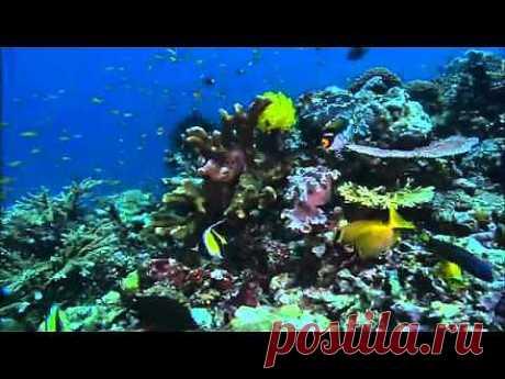 Грёзы Кораллового моря. Пробуждение - YouTube