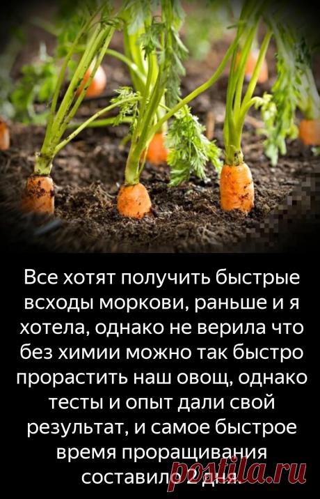 """""""Поначалу подумала что морковь не взойдет"""", а по итогу морковь проросла через 2 дня. Простой проверенный способ.   Сад и огород   Яндекс Дзен"""