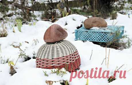 (+1) тема - Чем укрыть садовые растения на зиму | ОГОРОД БЕЗ ХЛОПОТ