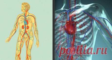 Какая у Вас вязкость КРОВИ, такая у Вас и ЖИЗНЬ - Журнал Советов Если в организме недостаток магния — сосуды становятся дырявыми, как будто решето. Если недостаток калия в организме — сердечная мышца начинает сбоить! Если недостаток магния —сосудыстановятся дырявыми как решето.Если недостаток калия в организме — сердечная мышца начинает сбоить. Сердечно — сосудистая система человека – изначально это очень надежная система. И когда мы говорим, что у […]