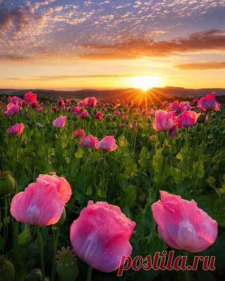 ღЦветы провожают солнышко.