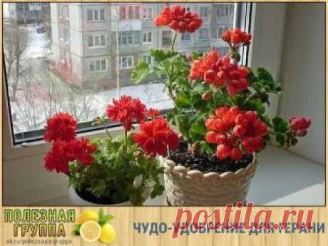 WONDERFUL FERTILIZER FOR THE GERANIUM\u000d\u000a\u000d\u000aYou have in the house a geranium? And whether you know how to look after a geranium that it blossomed and pleased you with violent vegetation?\u000d\u000a\u000d\u000aPrepare wonderful fertilizer for a geranium. Already after a while you do not learn the flower!\u000d\u000a\u000d\u000aIt is required to you:\u000d\u000a1. Otstoyanny water\u000d\u000a2. hydrogen peroxide\u000d\u000a3. iodine.\u000d\u000aTo mix 1 ml of peroxide with 1 liter of water. To add 0,6 ml of iodine. Properly to mix everything.\u000d\u000aBefore watering of a geranium be convinced that the earth absolutely dry. To water a geranium.\u000d\u000aPosmo...