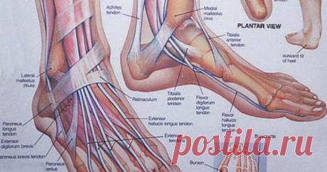 Упражнения, которые возобновляют все обменные процессы в крови и лимфе