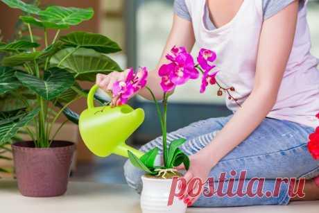 Мои орхидеи цветут круглый год. Все дело в настойке, которой я поливаю свои растения Никогда не покупала подкормки для домашних растений. Мне гораздо проще сделать удобрения своими руками в домашних условиях. Быстро. Эффективно. Экономно. Я очень люблю комнатные растения, их у меня много. Да и практически на все праздники ...