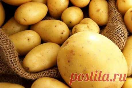 Картофельный газ: почему нельзя дома хранить картошку | Люблю Себя