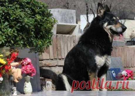 Собака, которая более 10 лет каждый день посещает могилу хозяина