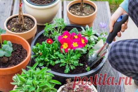 12 ошибок, которые вы совершаете при выращивании растений в контейнерах | Летники (Огород.ru)