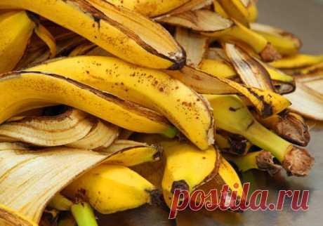 Подкормки для орхидей из банановой кожуры: 3 простых рецепта