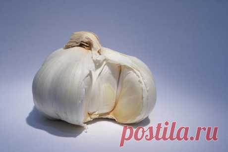 Recipes of health: garlic with honey for restoration of forces
