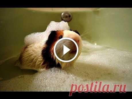 Animals Love Bath Time Compilation