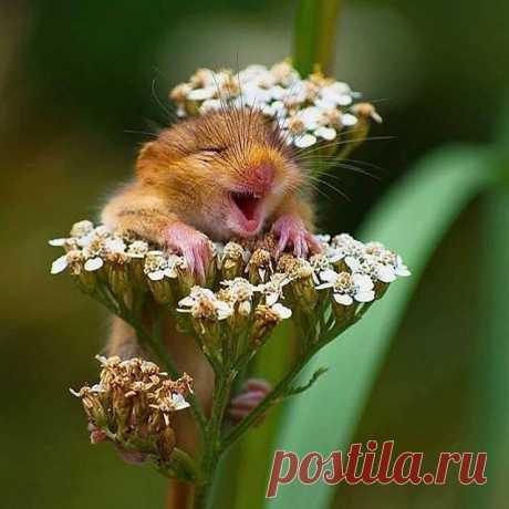 Me parece que alguien está muy contento reposando sobre las flores @andrea_zampatti_wildlights 📷 . Hashtag #imagenesporelmundo 🌐