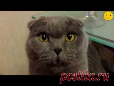 Говорящие коты, приколы с котами очень смешное видео