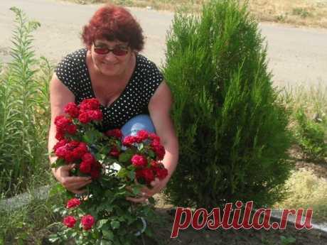 Светлана Брендель