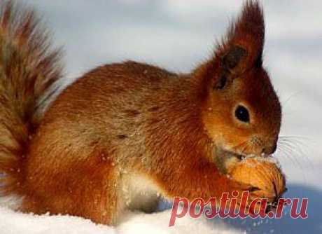 Полезные орехи…активированные  В свое семя растение закладывает все самое ценное для продолжения и рождения новой жизни.  Орехи – это тоже семена, только спрятанные за более твердой оболочкой.