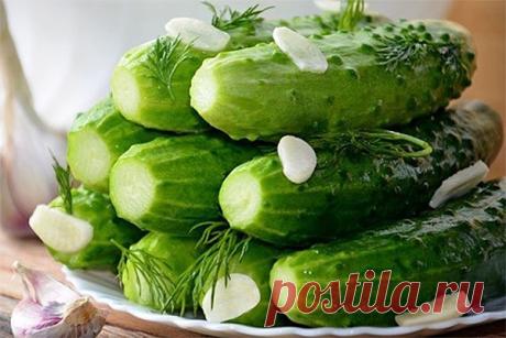 Traškūs trumpai rauginti agurkai – imkite receptą! Ingredientai:  – kilogramas nedidelių agurkų  – gazuotas mineralinis vanduo – litras  – druska – 2 valgomieji šaukštai  – česnakas – 3 skiltelės  – krapų pundelis    Paruošimas:  1. Dedame į indo dugną pusę krapų. Agurkus gerai nuplauti ir nupjauti galiukus, glaudžiai sudėti į
