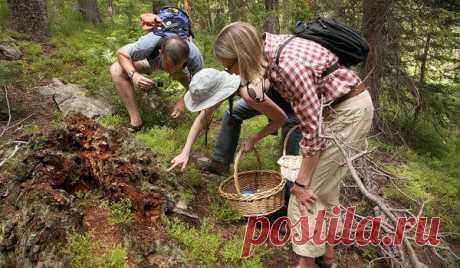 Весенние грибы - Садоводка