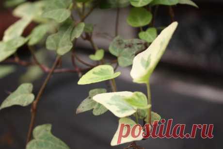 Удобрения для комнатных растений, которые мы покупаем зря - Садоводка