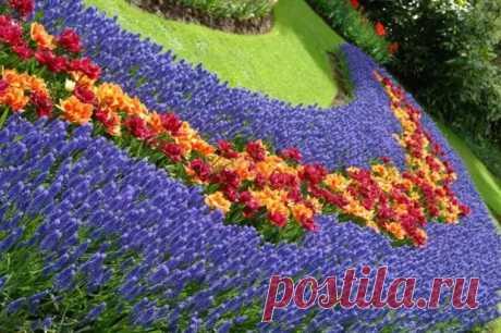 Красивая весенняя клумба: 16 идей для вдохновения - Цветочки - медиаплатформа МирТесен