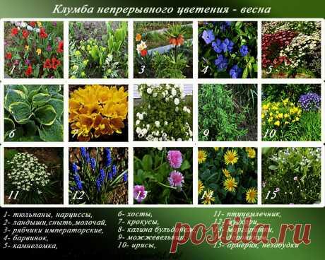 Клумба непрерывного цветения — названия и фото растений с весны до осени | Дача - это маленькая жизнь | Яндекс Дзен