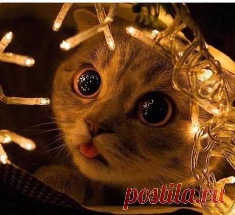 They have pads! 17 cats who think that they are Christmas-tree decorations