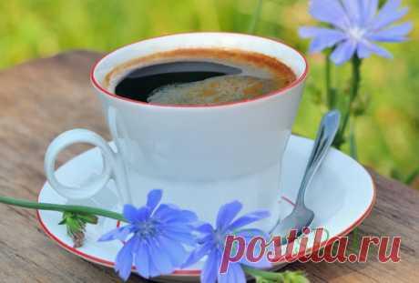 Цикорий. Забытый напиток, который оздоравливает и может заменить кофе | sm-news.ru