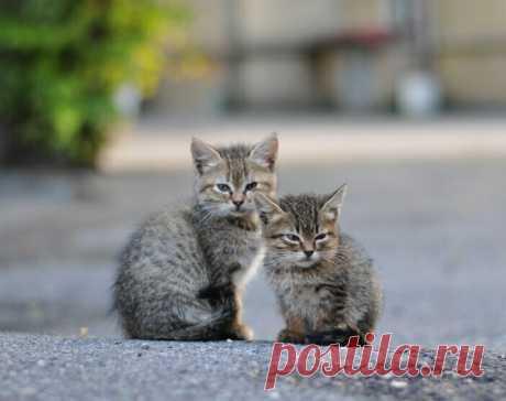 Осенние подкидыши. Что происходит с котятами, которых бросают нерадивые дачники