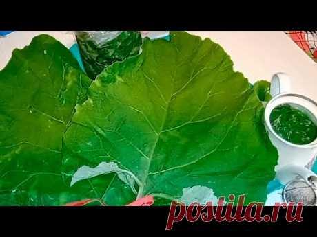 ЛИСТЬЯ ЛОПУХА - НАСТОЯЩАЯ ПАНАЦЕЯ ОТ 1000 БОЛЕЗНЕЙ.3 способа применения листьев лопуха - YouTube