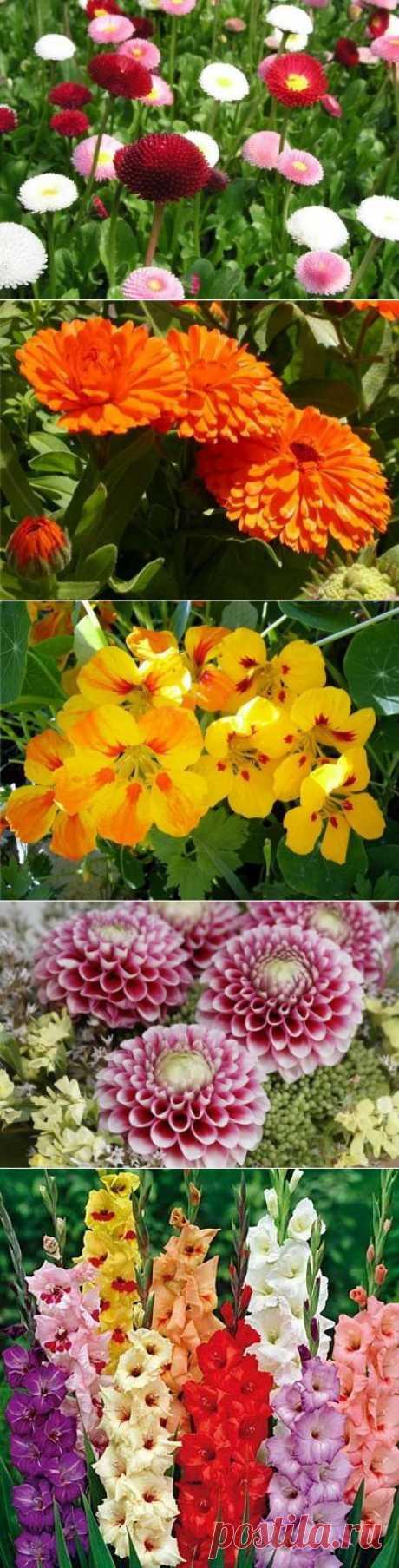 Пять целебных цветков у вас на клумбе | Наш дом