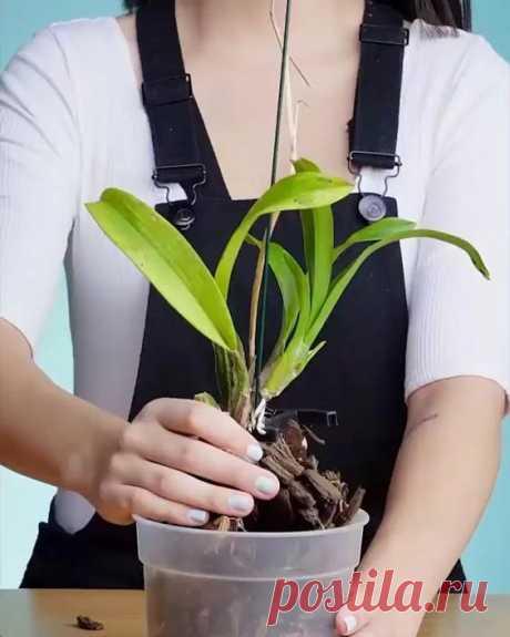 Confira algumas dicas para recuperar e salvar suas orquídeas.😊🌸❤️️ #orquideas#como cuidar#jardim#flores#plantas#amoorquidea#comocuidardeorquideaemcasa#asorquideas#orquidario#natureza