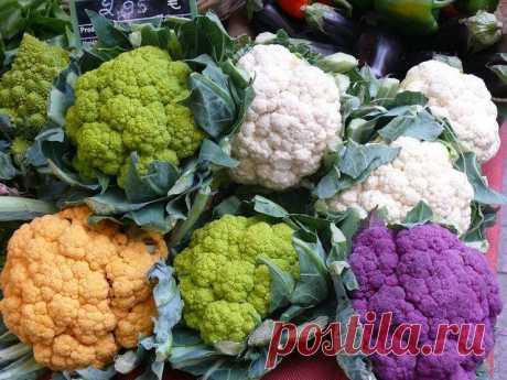 Цветная капуста – выращивание и уход в открытом грунте Цветная капуста – выращивание и уход в открытом грунте. Выращивание рассады, болезни капусты. Лучшие семена для посадки. Подкормка и удобрение.