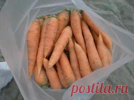 Мой главный секрет хранения моркови до следующего лета | садоёж | Яндекс Дзен