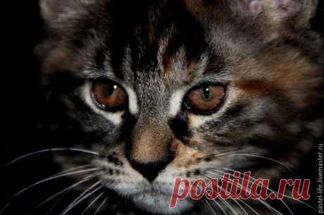 Рисуем пастелью портрет котёнка на тёмной бумаге – Ярмарка Мастеров