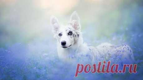 Сказочно красивые фотографии собак