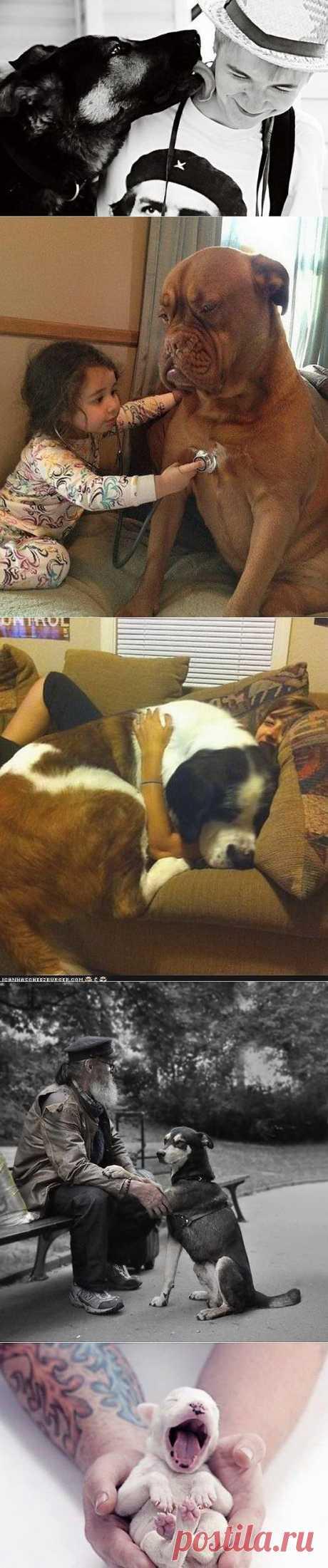 Что такое собака в доме?.