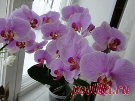 Случайно узнала рецепт подкормки, после которой все орхидеи стали выпускать цветоносы | 6 соток
