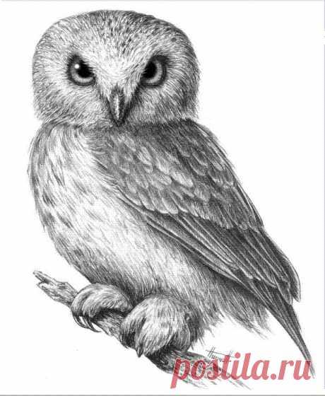 Рисуем сову простым карандашом — Сделай сам, идеи для творчества - DIY Ideas