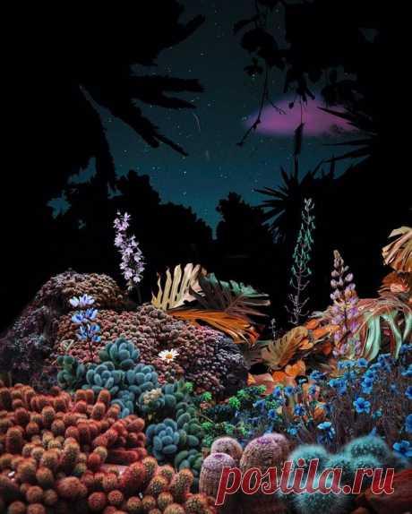 Тот случай, когда камеру берет в руки нейробиолог: фантастические снимки ночного леса, заставляющие посмотреть на мир под другим углом — блог туриста Anna_Kambarova на Туристер.Ру