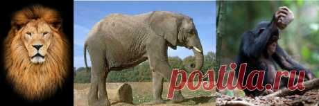 Почему самый сильный - слон, самая умная - обезьяна, а царь зверей - лев? - Yvision.kz